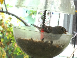 Squirrel-resistant birdfeeder in operation, as per design